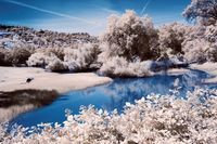 Meadows & Wildlife, near Lake Oroville in IR
