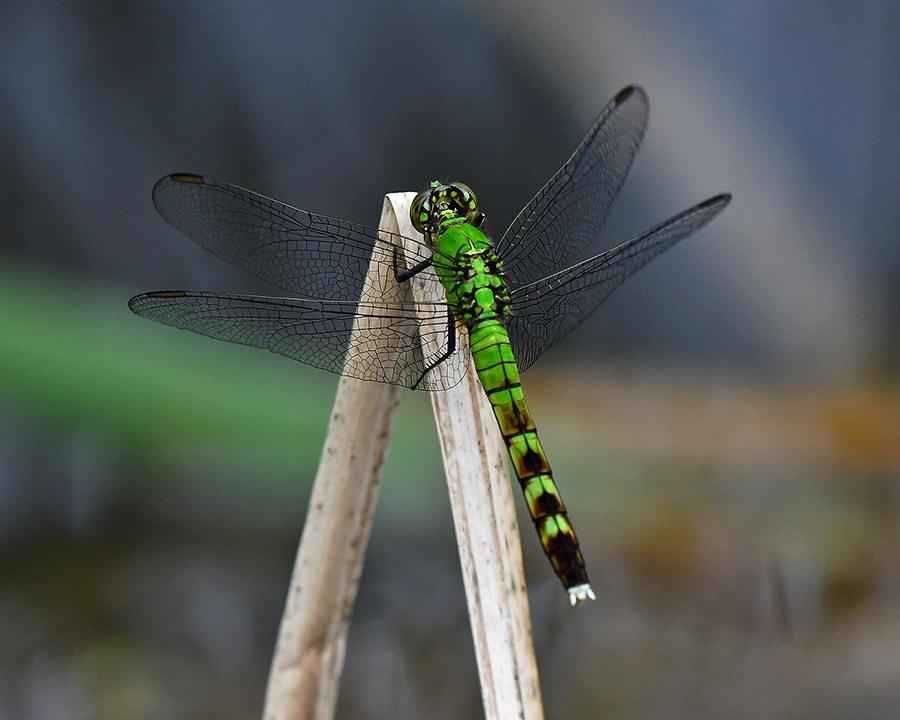 Dragonflys during the crash - FM Forums