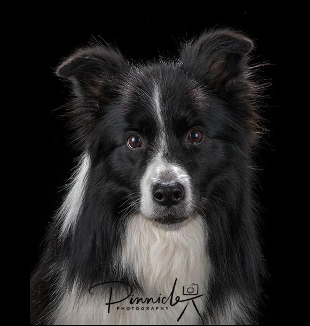 Dog portraits (lighting setup) - FM Forums
