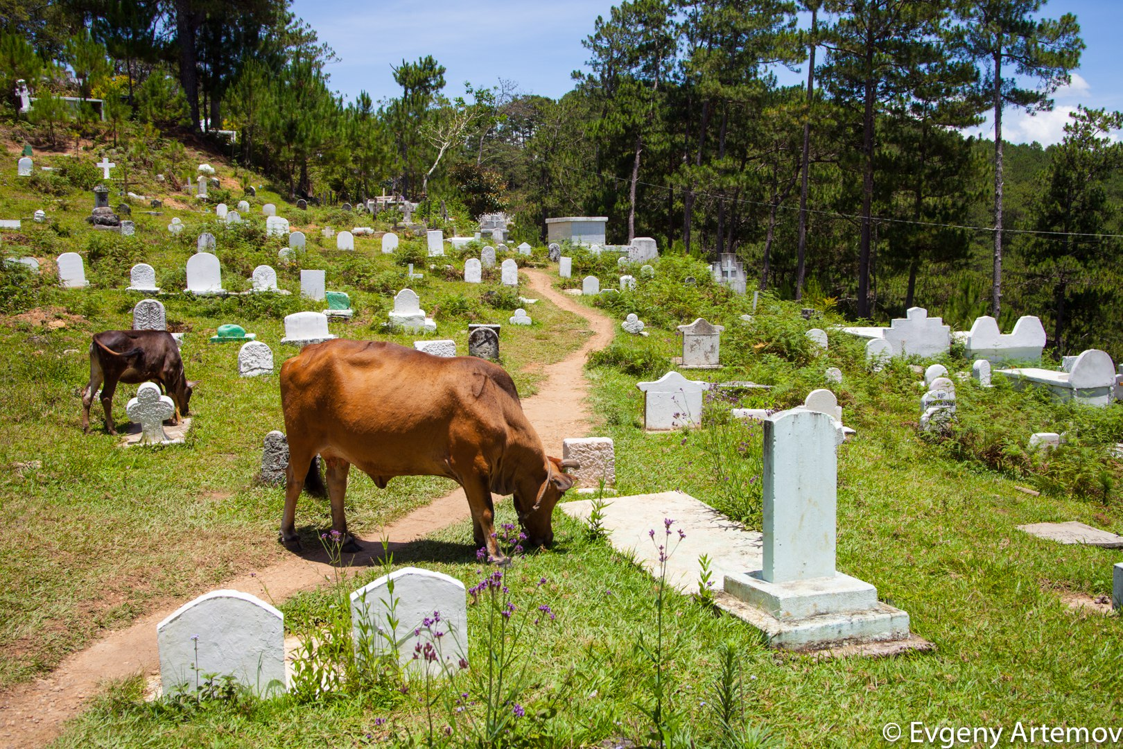 Cemetery at Sagada, Philippines - FM Forums