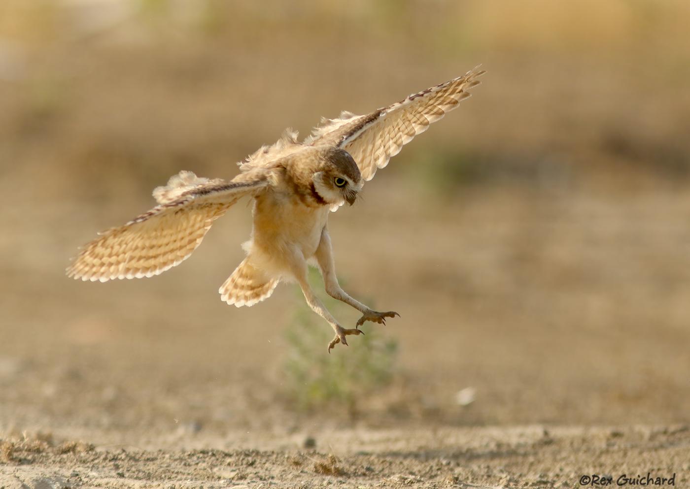 SuperB owl Sunday IV - FM Forums